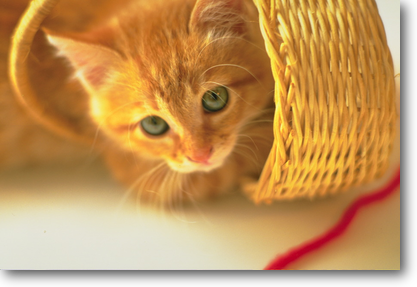 CAT2.png